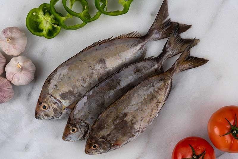 تناول السمك يقي من تأثير التلوث على الدماغ