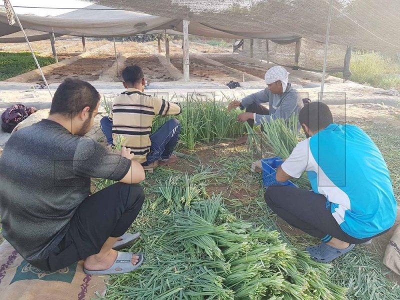 المزارعون البحرينيون يستغيثون: مزارعنا تتدهور