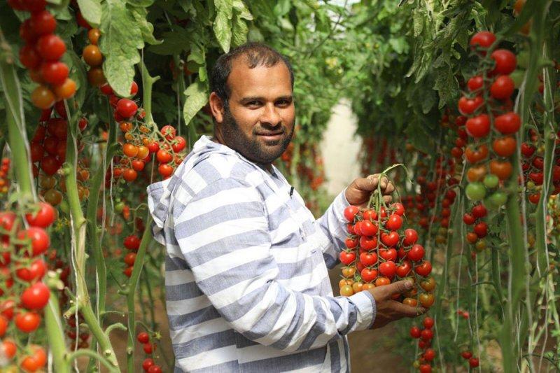 قانون حماية الأصناف النباتية الجديدة يدعم جهود المزارعين البحرينيين
