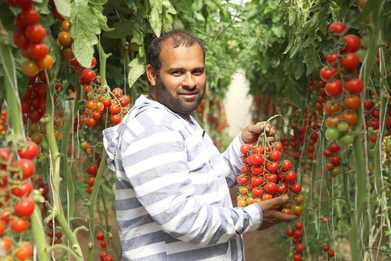 قانون حماية الأصناف النباتية يدعم جهود المزارعين البحرينيين