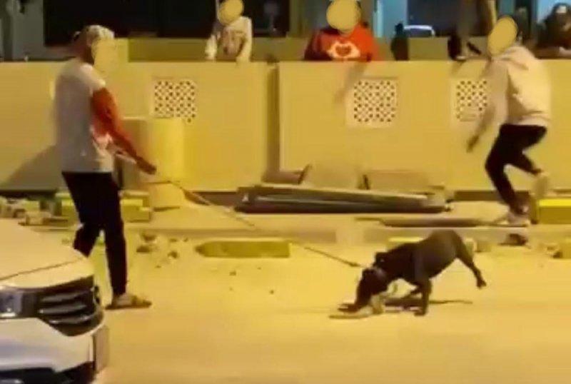 بالصورة: الشرطة توقف صاحب كلب توبلي بعد بلاغ من جمعية الرفق بالحيوان.. وهذه التفاصيل