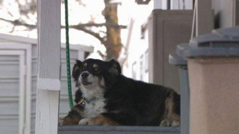 """الحظ يبتسم لكلبة أليفة.. 5 ملايين دولار من أجل """"لولو"""""""