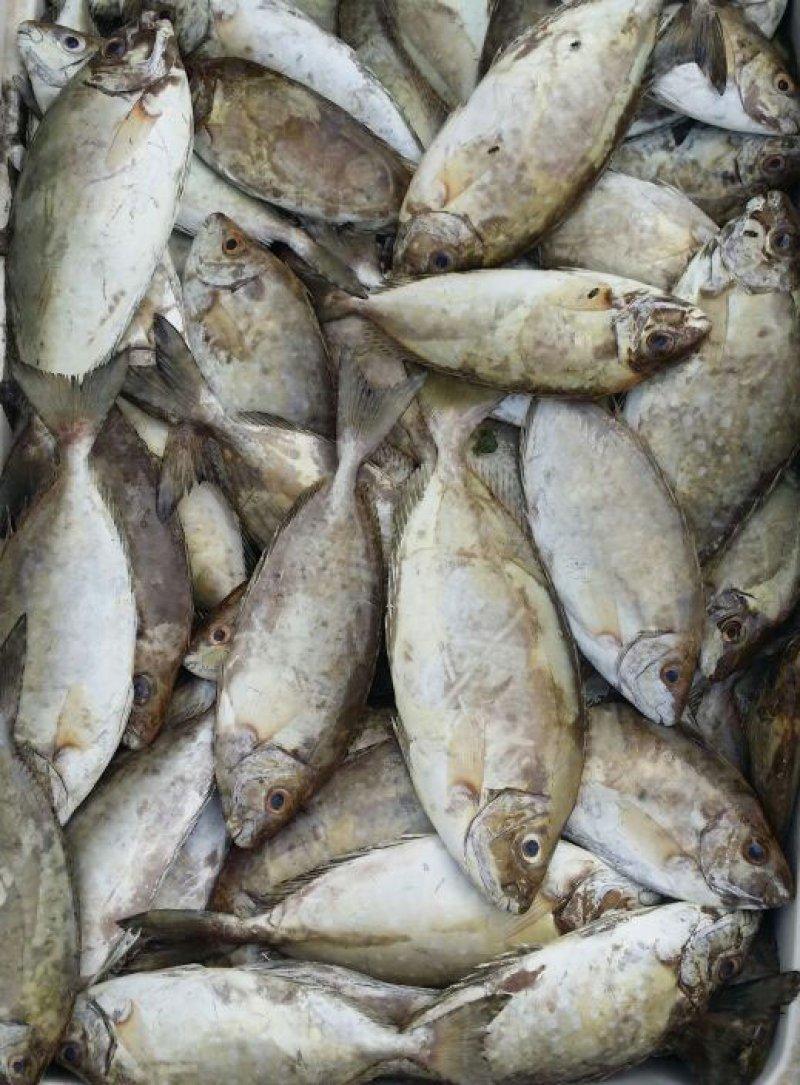 ارتفاع جنوني لسعر الصافي والأسماك وسيستمر لأشهر.. وهذه الأسباب
