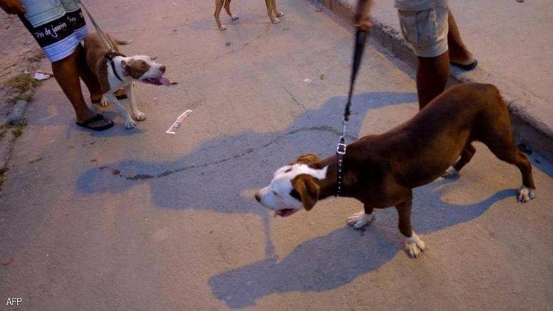 وفاة مروعة.. كلاب شرسة تنهي حياة سيدة بالبرازيل